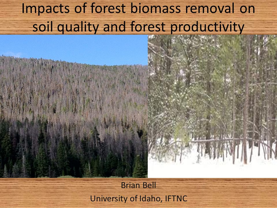Some Current Forestry Issues 73 million acres of Overstocked Forest in West (USFS, 2003) 40 million dead acres of beetle killed forest in BC/Alberta, 4 million CO/WY Longer fire season, increasing fire severity Increasing Cost of Transportation and biomass Removal Biomass removal can have negative impacts on future productivity