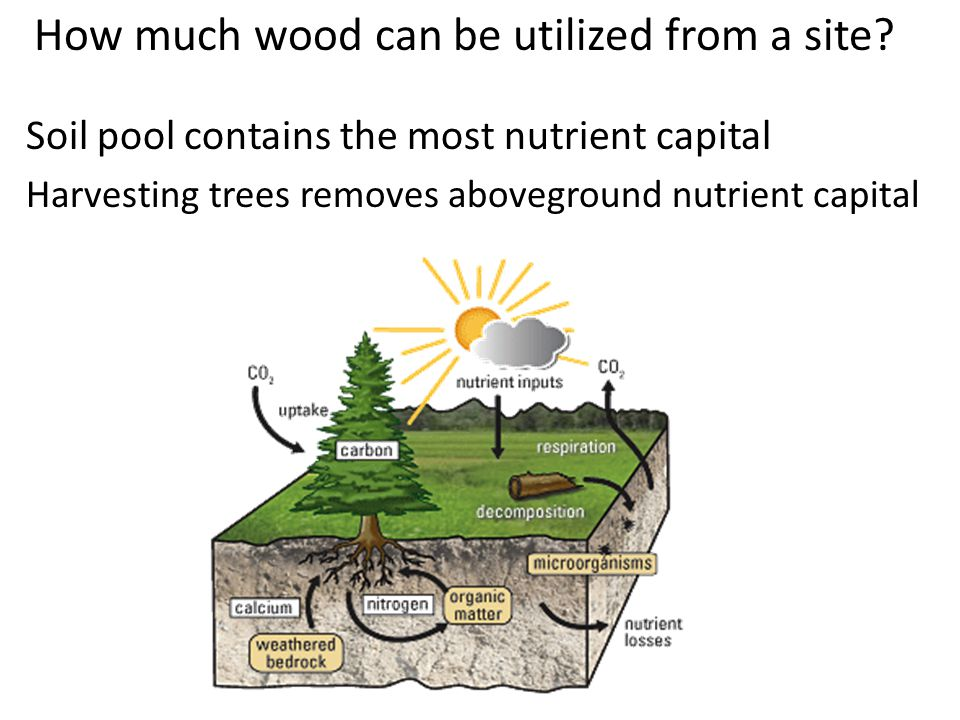 Objectives Determine the effects of slash removal rates on site productivity Can soil amendments mitigate the effects of slash removal Response to thinning affected by slash removal and amendment treatments