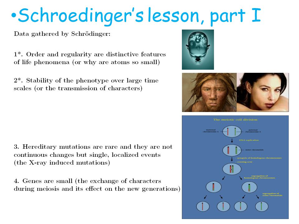 Schroedingers lesson, part I