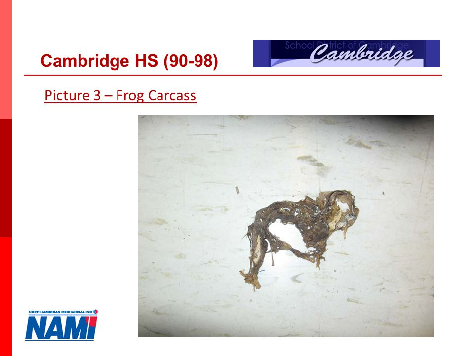 20 Picture 3 – Frog Carcass Cambridge HS (90-98)