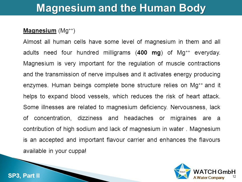 WATCH GmbH A Water Company Magnesium and the Human Body 12 SP3, Part II Magnesium (Mg ++ ) Almost all human cells have some level of magnesium in them and all adults need four hundred milligrams (400 mg) of Mg ++ everyday.