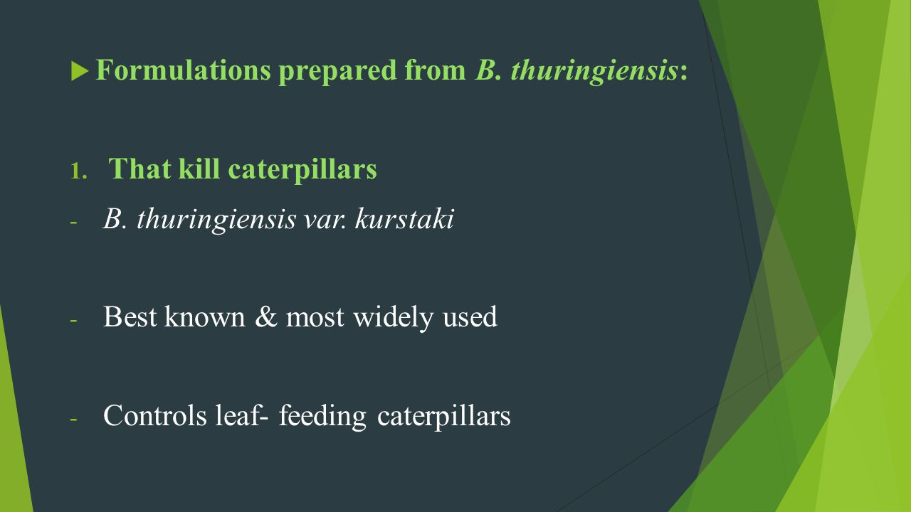 Formulations prepared from B. thuringiensis: 1. That kill caterpillars - B. thuringiensis var. kurstaki - Best known & most widely used - Controls lea