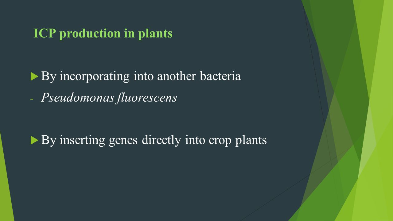 ICP production in plants By incorporating into another bacteria - Pseudomonas fluorescens By inserting genes directly into crop plants