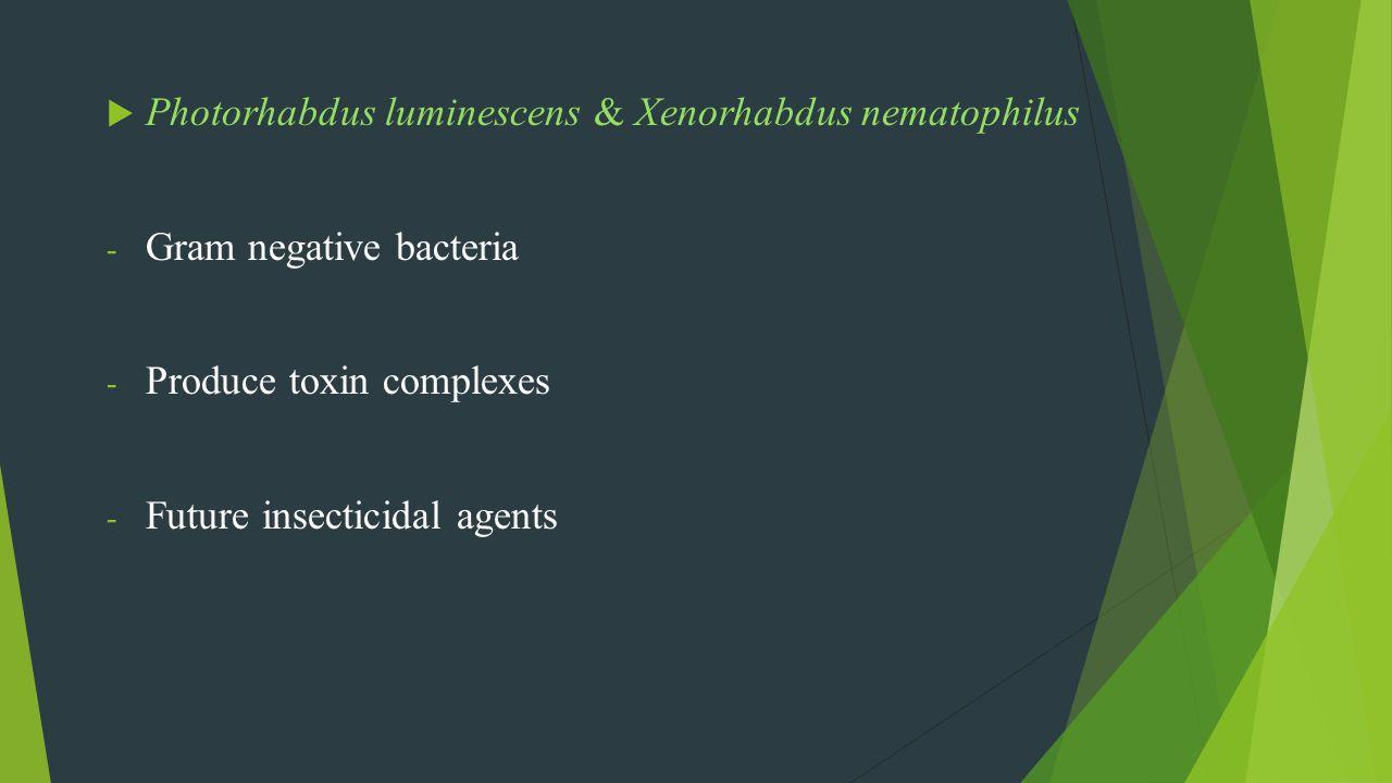 Photorhabdus luminescens & Xenorhabdus nematophilus - Gram negative bacteria - Produce toxin complexes - Future insecticidal agents