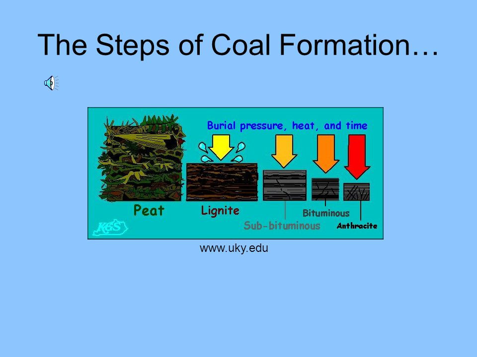 The Coal Formation Process … The organic matter accumulates and forms a bed of peat. The peat bed gets buried by other sediments and under heat and pr