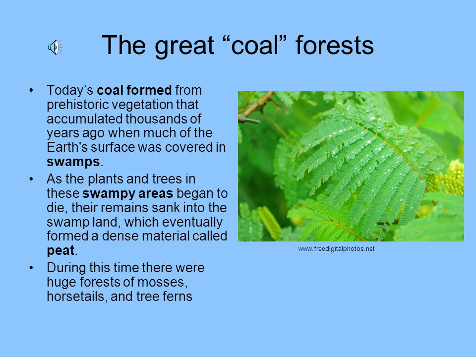 The great coal forests Todays coal formed from prehistoric vegetation that accumulated thousands of years ago when much of the Earth s surface was covered in swamps.