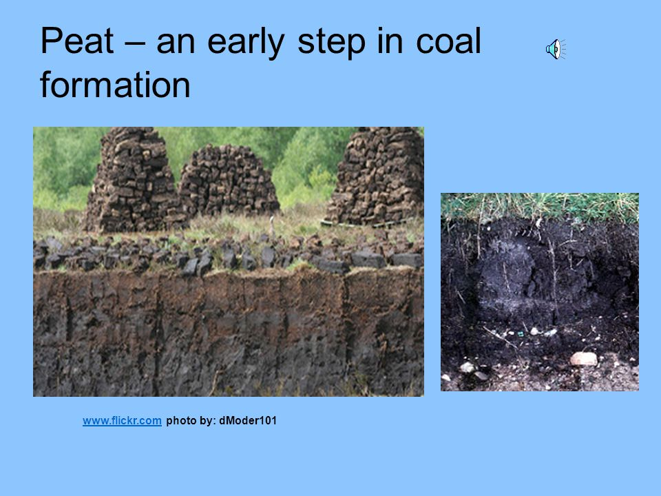 Peat – an early step in coal formation www.flickr.comwww.flickr.com photo by: dModer101