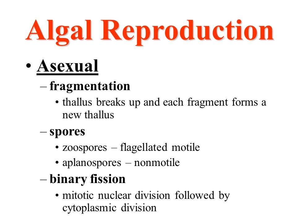 Algal Reproduction Asexual –fragmentation thallus breaks up and each fragment forms a new thallus –spores zoospores – flagellated motile aplanospores