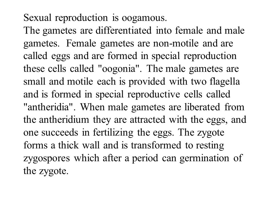 Sexual reproduction is oogamous. The gametes are differentiated into female and male gametes. Female gametes are non-motile and are called eggs and ar