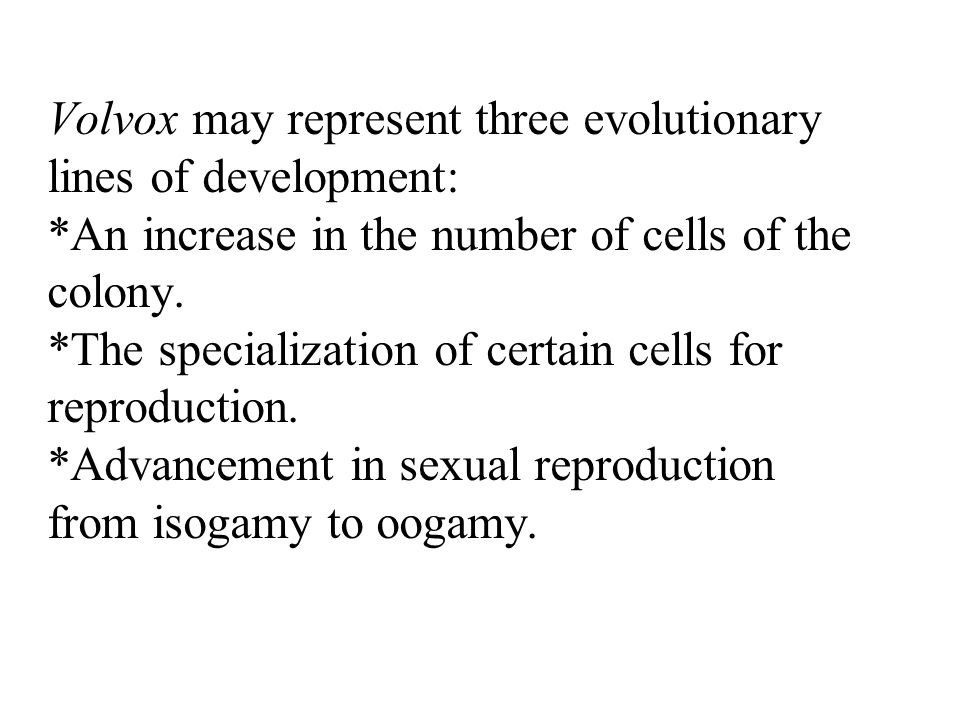 Volvox may represent three evolutionary lines of development: *An increase in the number of cells of the colony. *The specialization of certain cells
