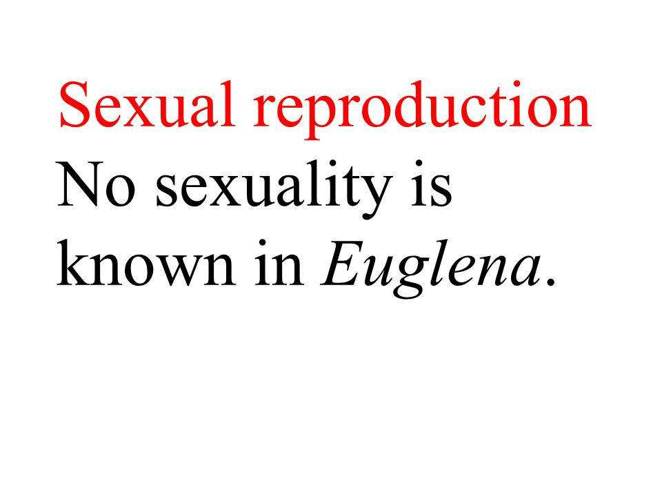 Sexual reproduction No sexuality is known in Euglena.