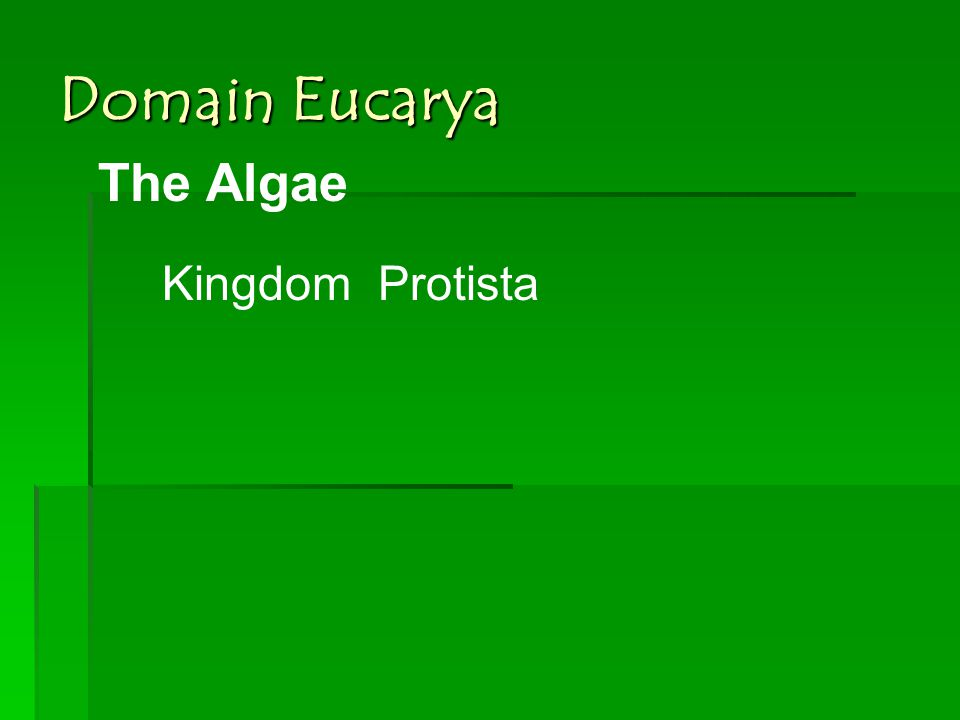Domain Eucarya The Algae KingdomProtista
