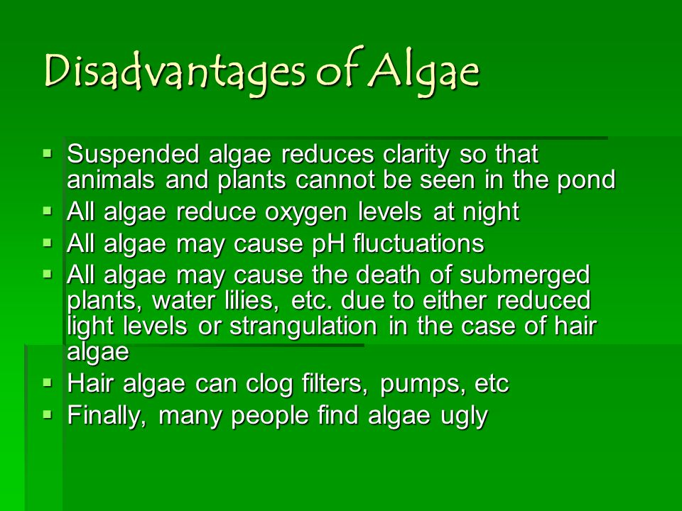 Disadvantages of Algae Suspended algae reduces clarity so that animals and plants cannot be seen in the pond Suspended algae reduces clarity so that a
