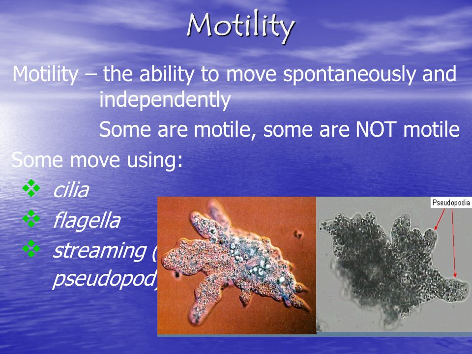 Motility Motility – the ability to move spontaneously and independently Some are motile, some are NOT motile Some move using: cilia flagella streaming