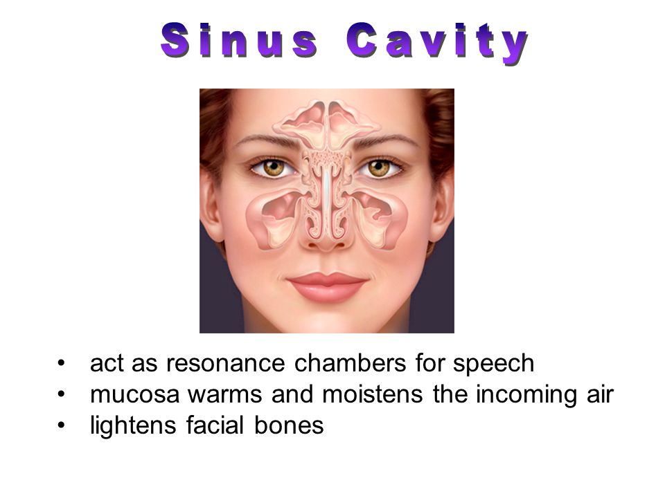 act as resonance chambers for speech mucosa warms and moistens the incoming air lightens facial bones