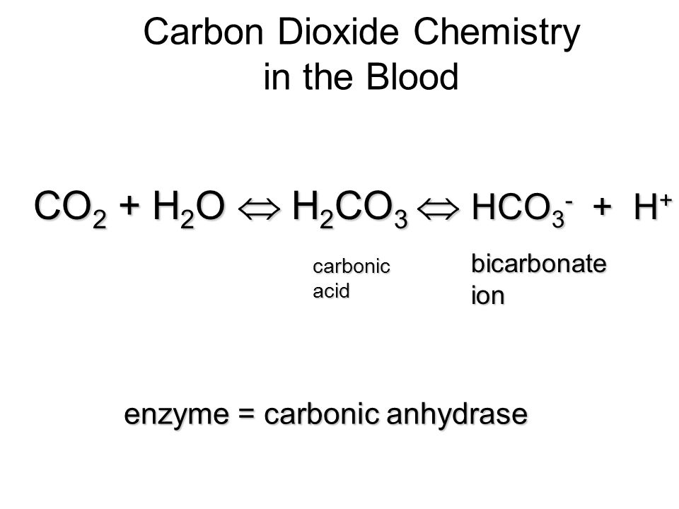 Carbon Dioxide Chemistry in the Blood CO 2 + H 2 O H 2 CO 3 HCO 3 - + H + carbonicacid bicarbonateion enzyme = carbonic anhydrase