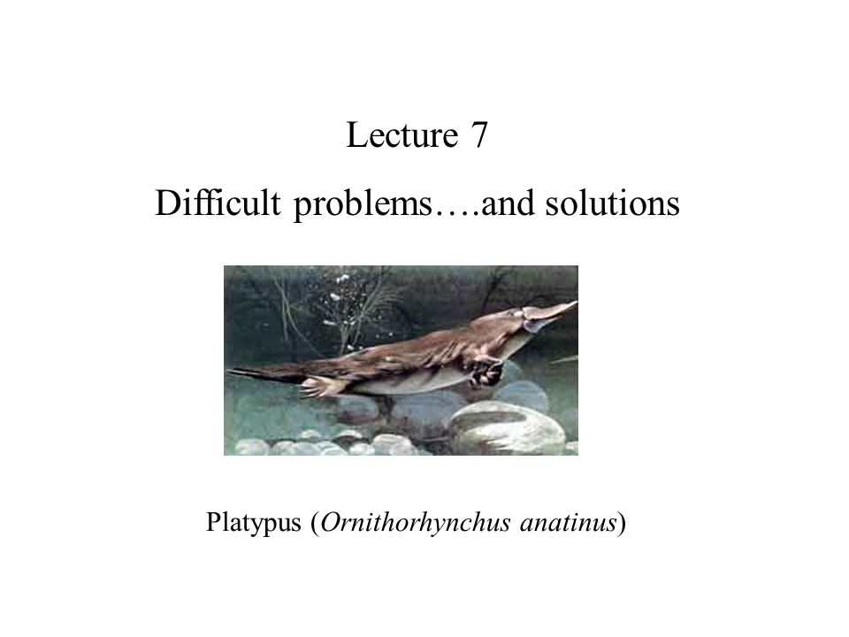 Lecture 7 Difficult problems….and solutions Platypus (Ornithorhynchus anatinus)