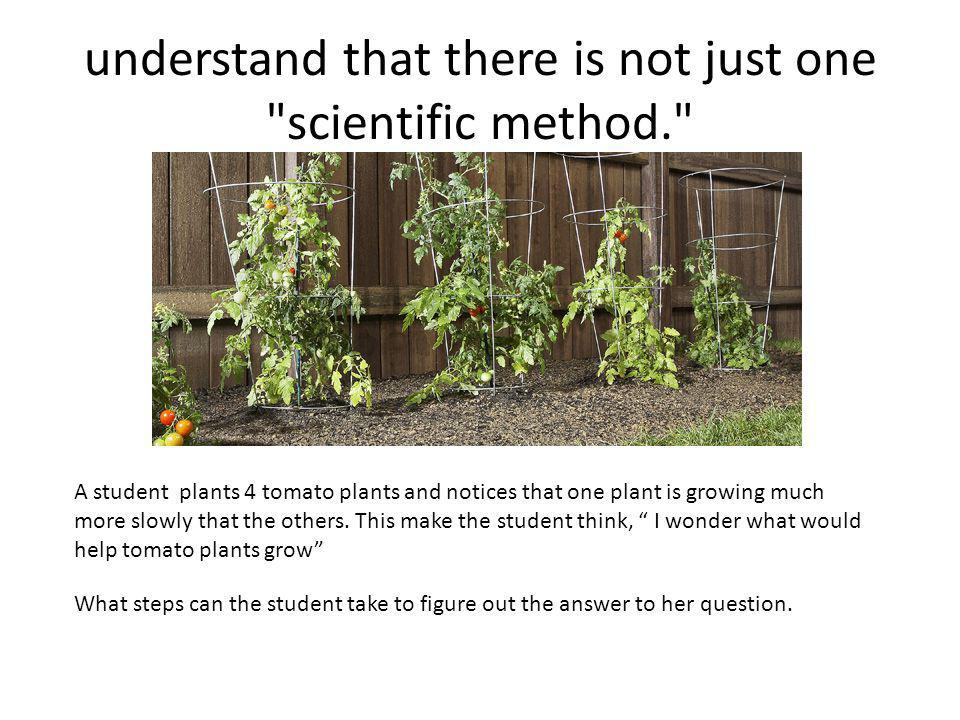 understand that there is not just one scientific method. A student plants 4 tomato plants and notices that one plant is growing much more slowly that the others.