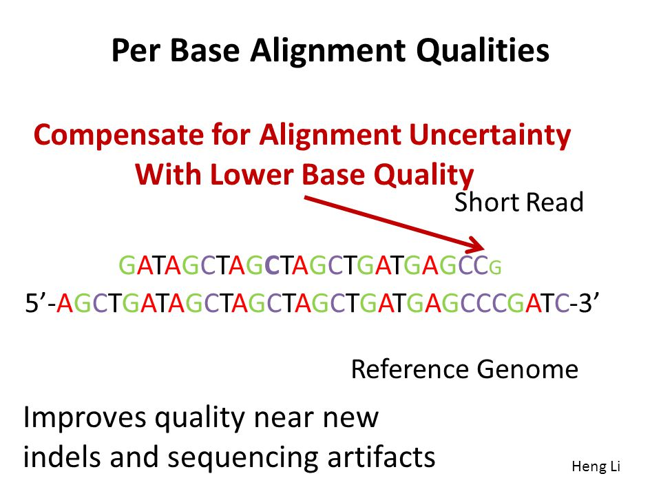Per Base Alignment Qualities Heng Li 5-AGCTGATAGCTAGCTAGCTGATGAGCCCGATC-3 GATAGCTAGCTAGCTGATGAGCC G Reference Genome Short Read Compensate for Alignme