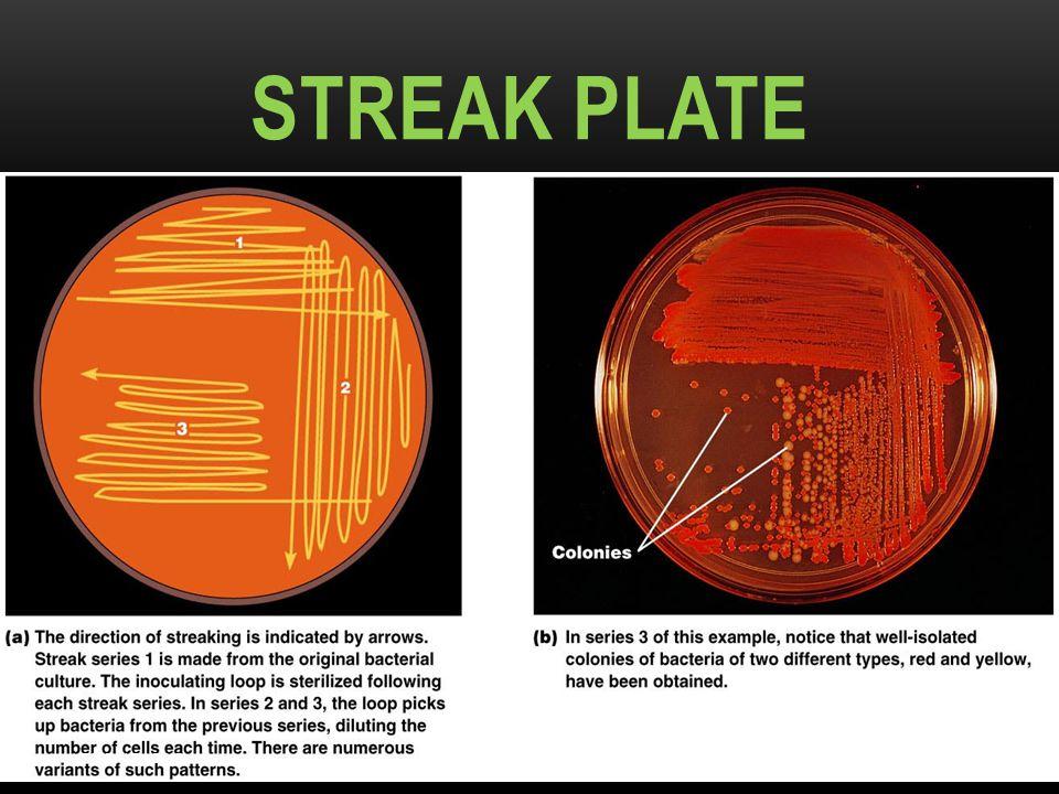 STREAK PLATE Figure 6.10a–b DR.T.V.RAO MD 23