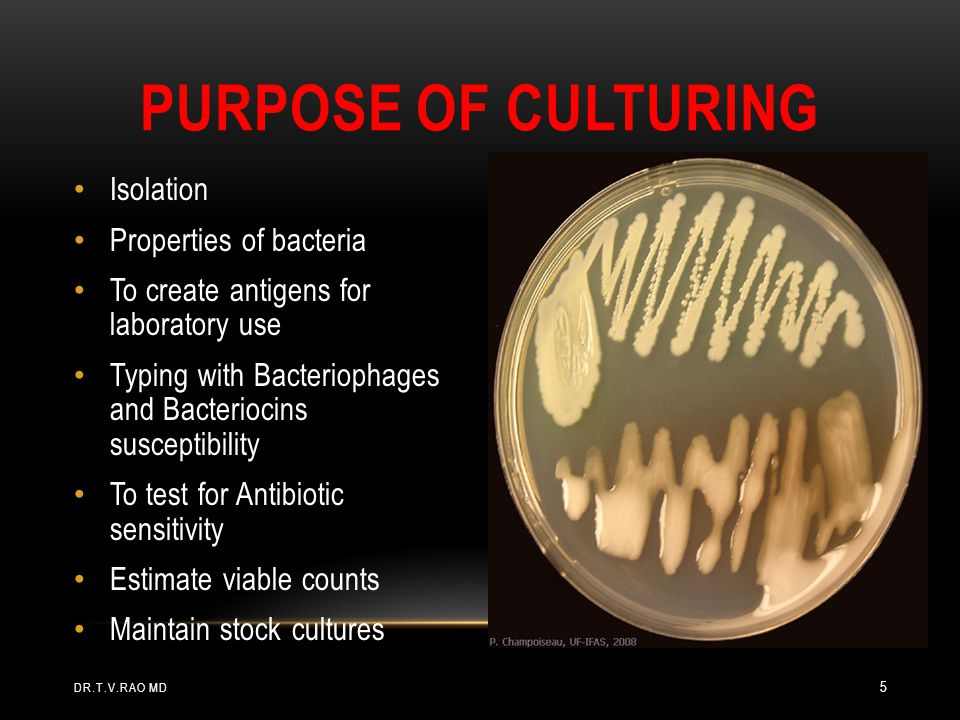 Isolation Properties of bacteria To create antigens for laboratory use Typing with Bacteriophages and Bacteriocins susceptibility To test for Antibiotic sensitivity Estimate viable counts Maintain stock cultures PURPOSE OF CULTURING DR.T.V.RAO MD 5