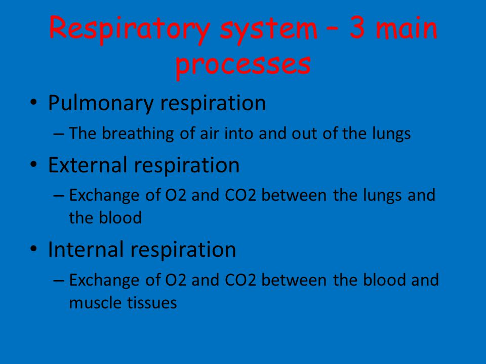 Respiratory system – 3 main processes Pulmonary respiration – The breathing of air into and out of the lungs External respiration – Exchange of O2 and