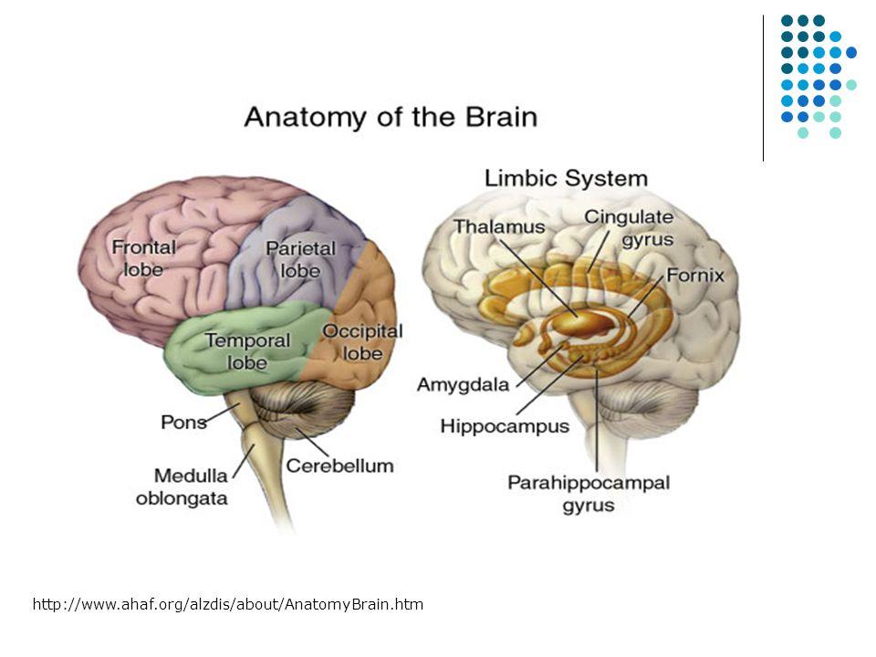 http://www.ahaf.org/alzdis/about/AnatomyBrain.htm