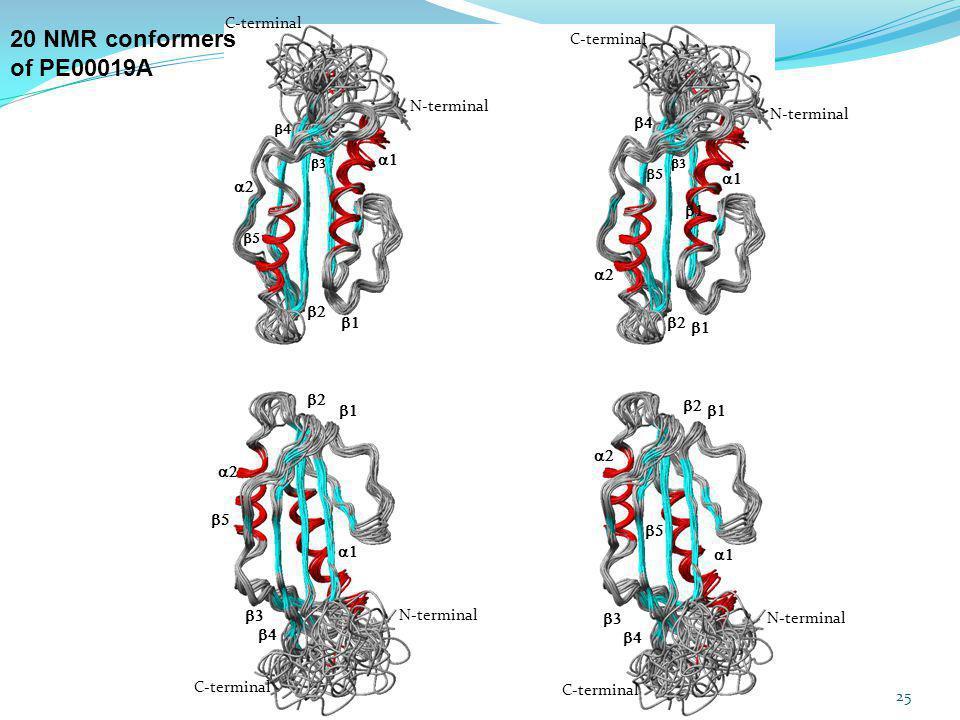 20 NMR conformers of PE00019A C-terminal N-terminal C-terminal N-terminal C-terminal N-terminal C-terminal N-terminal 25