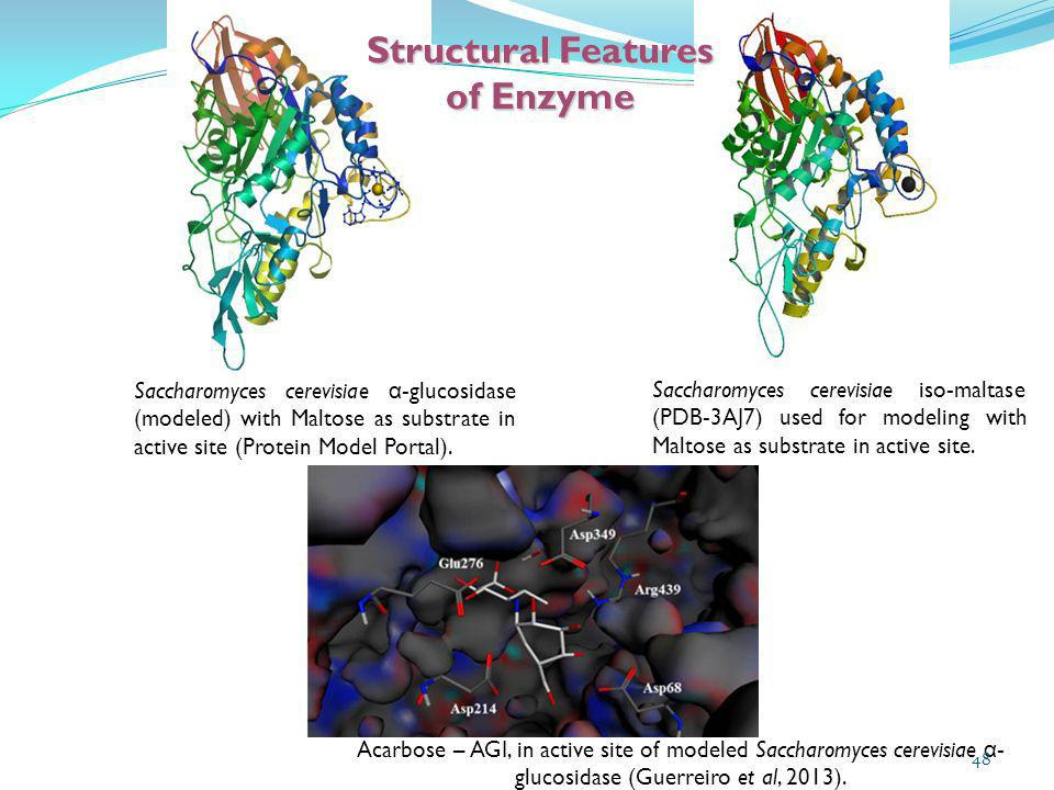 Saccharomyces cerevisiae α -glucosidase (modeled) with Maltose as substrate in active site (Protein Model Portal). Saccharomyces cerevisiae iso-maltas