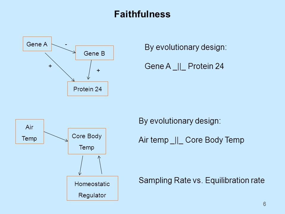 6 Faithfulness Gene A Gene B Protein 24 + + - By evolutionary design: Gene A _||_ Protein 24 Air Temp Core Body Temp Homeostatic Regulator By evolutionary design: Air temp _||_ Core Body Temp Sampling Rate vs.