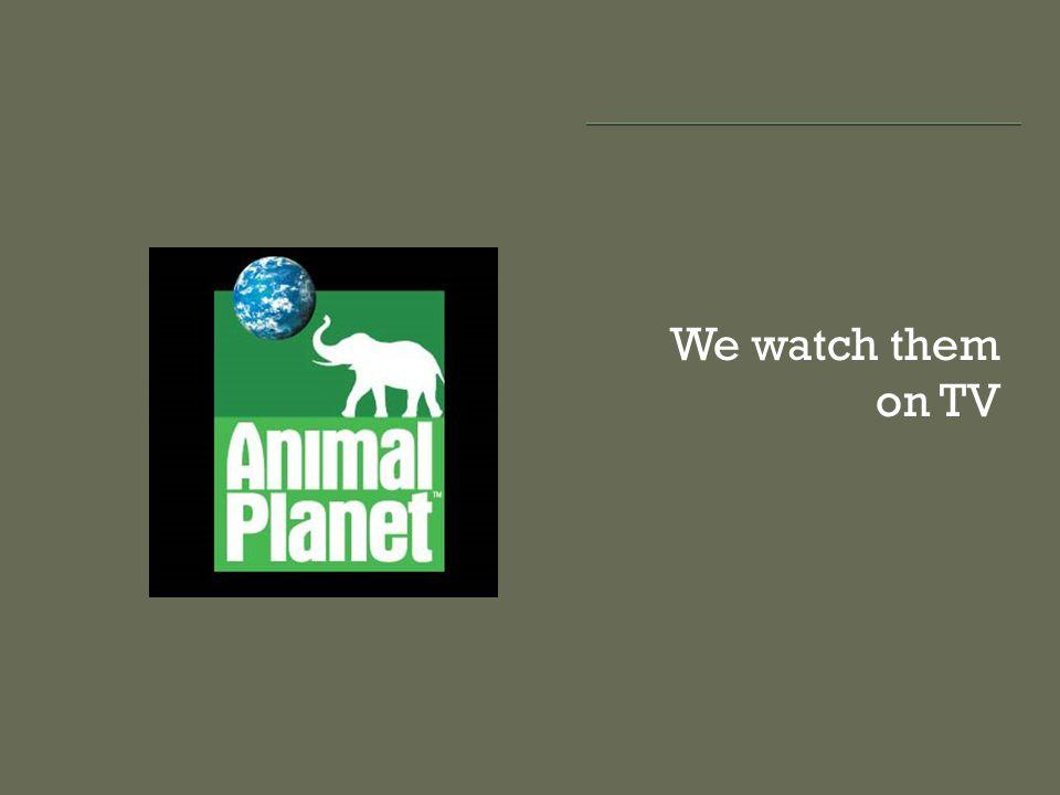 We watch them on TV