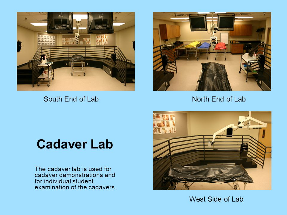 Cadaver Lab The cadaver lab is used for cadaver demonstrations and for individual student examination of the cadavers.