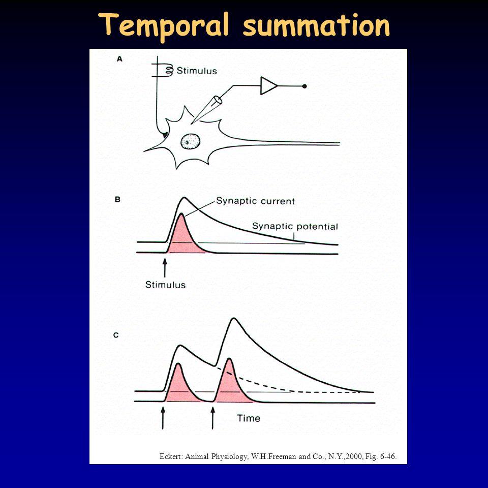 Temporal summation Eckert: Animal Physiology, W.H.Freeman and Co., N.Y.,2000, Fig. 6-46.