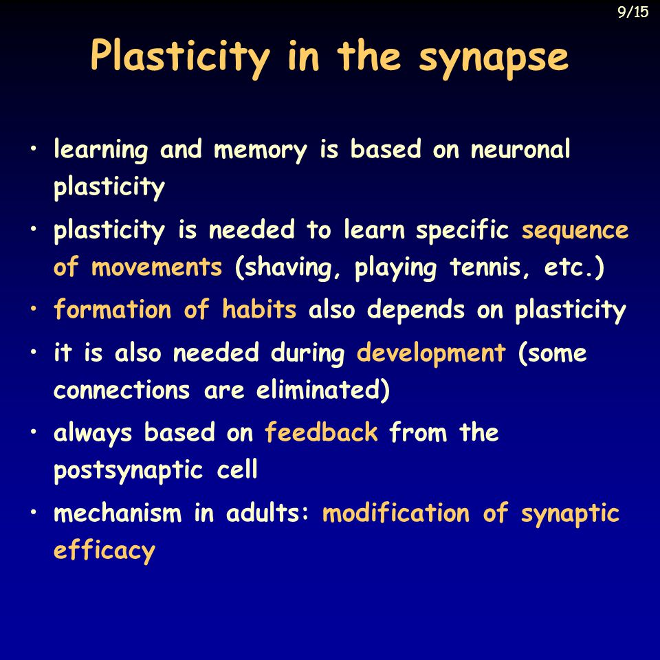 Plasticity in the synapse learning and memory is based on neuronal plasticity plasticity is needed to learn specific sequence of movements (shaving, p