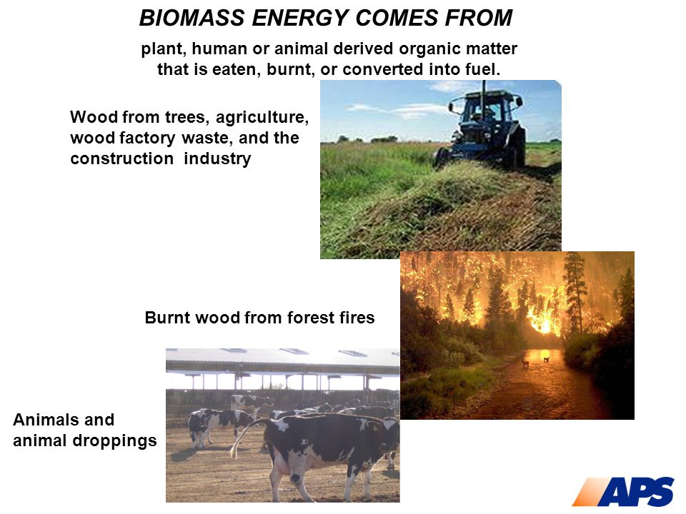 BIOMASS ENERGY COMES FROM plant, human or animal derived organic matter that is eaten, burnt, or converted into fuel. Wood from trees, agriculture, wo