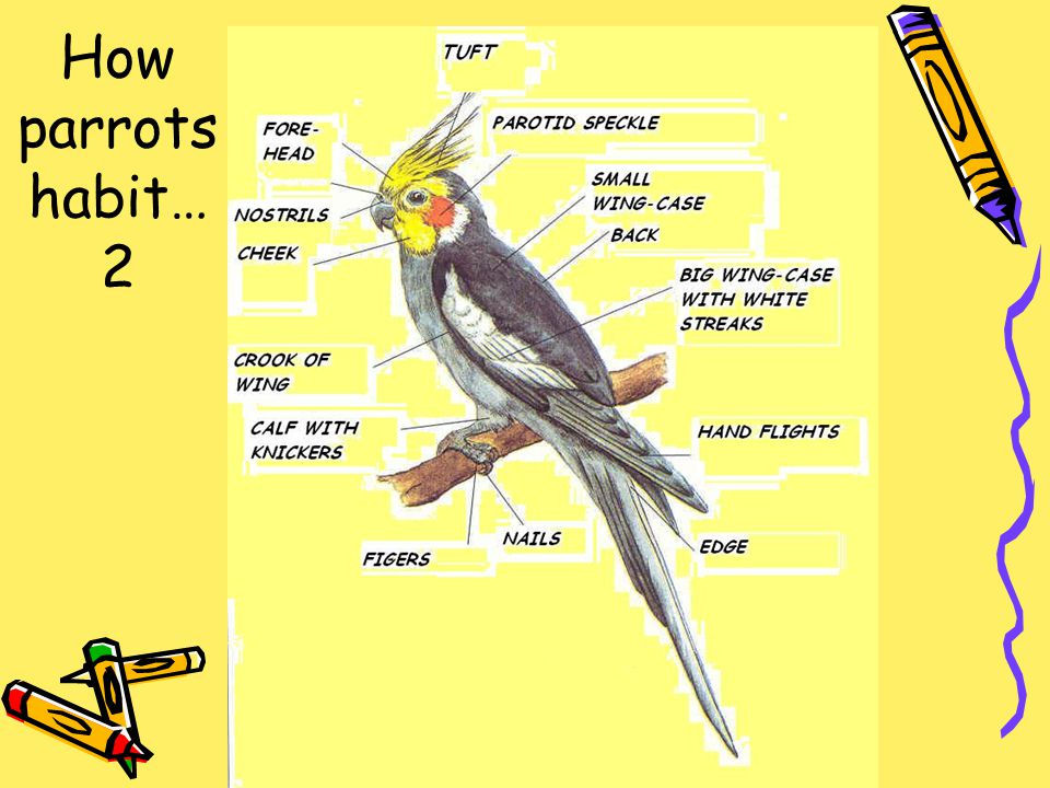 How parrots habit… 2
