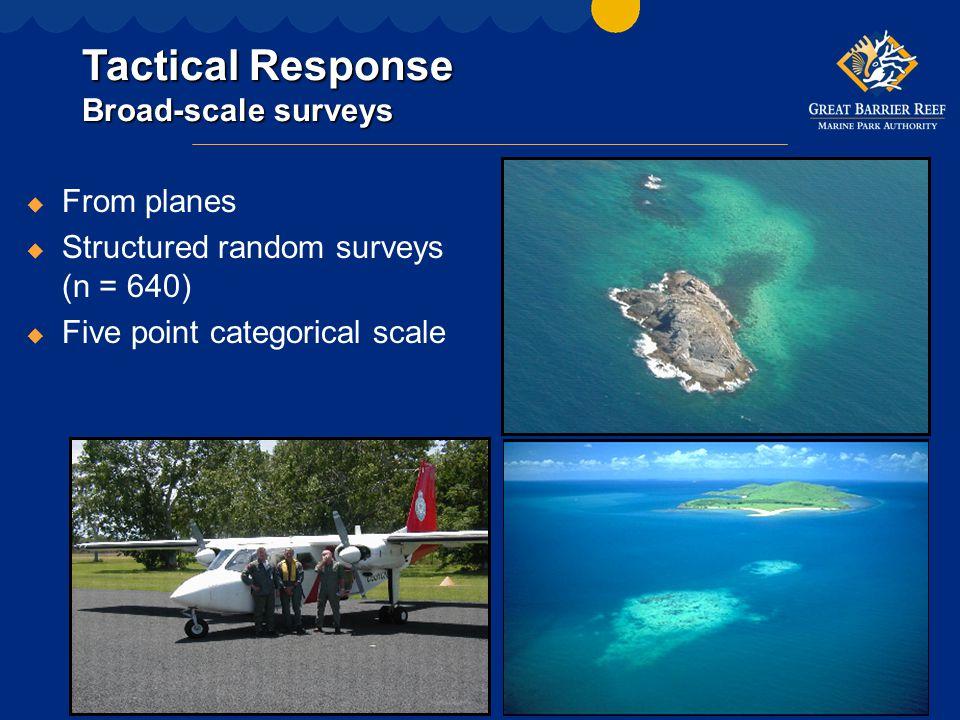 Tactical Response Fine scale surveys u On SCUBA u Rapid assessments + video transects u Structured random surveys (n = 27) u Targeted surveys (n = 8)