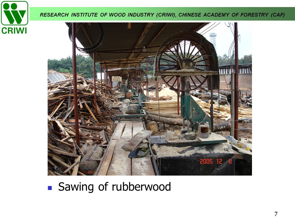 RESEARCH INSTITUTE OF WOOD INDUSTRY (CRIWI), CHINESE ACADEMY OF FORESTRY (CAF) 7 Sawing of rubberwood