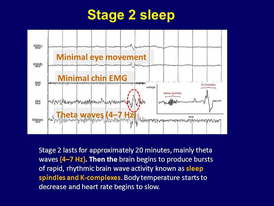 Stage 2 sleep Stage 2 lasts for approximately 20 minutes, mainly theta waves (4–7 Hz). Then the brain begins to produce bursts of rapid, rhythmic brai