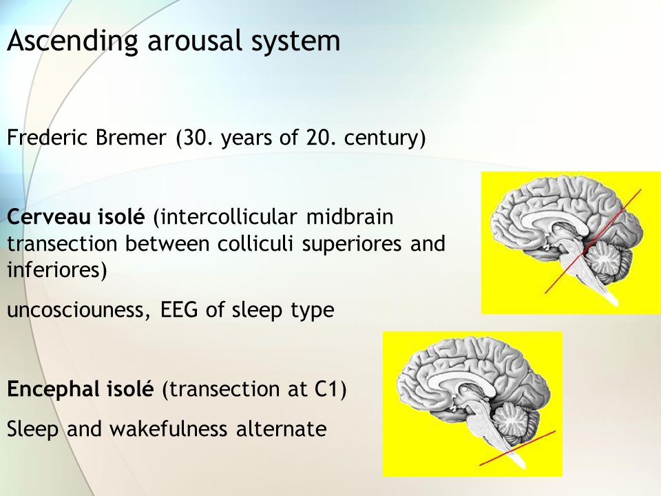 Ascending arousal system Frederic Bremer (30. years of 20. century) Cerveau isolé (intercollicular midbrain transection between colliculi superiores a