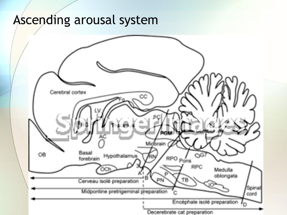 Ascending arousal system