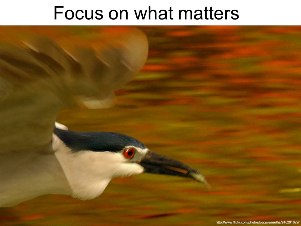 Focus on what matters http://www.flickr.com/photos/bocavermelha/245291629/