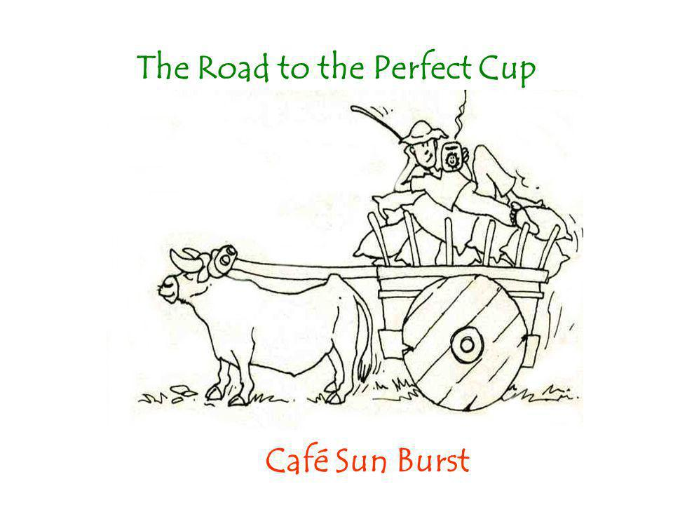 The Road to the Perfect Cup Café Sun Burst