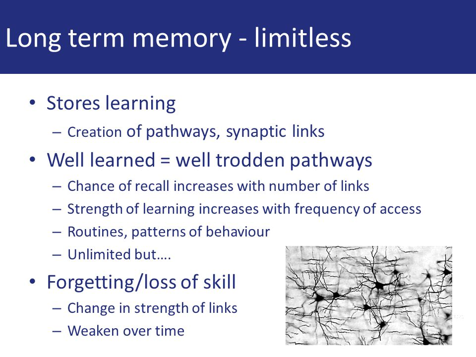 Long term memory - limitless Stores learning – Creation of pathways, synaptic links Well learned = well trodden pathways – Chance of recall increases