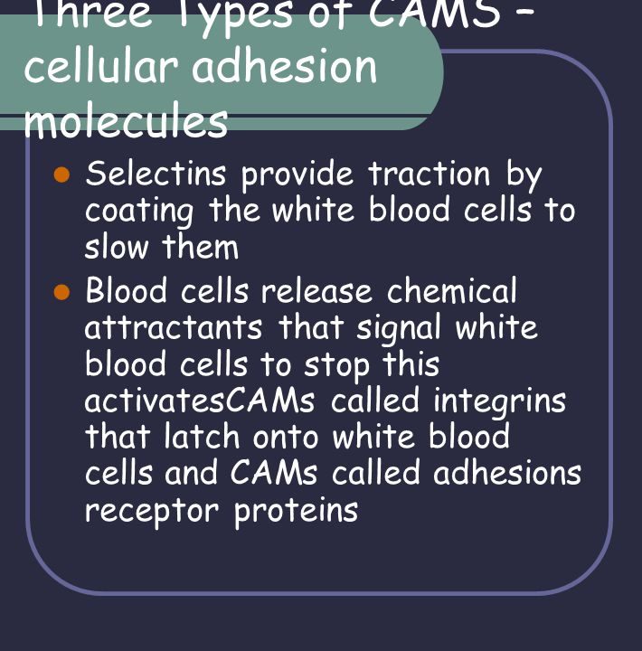 Three Types of CAMS – cellular adhesion molecules Selectins provide traction by coating the white blood cells to slow them Blood cells release chemica