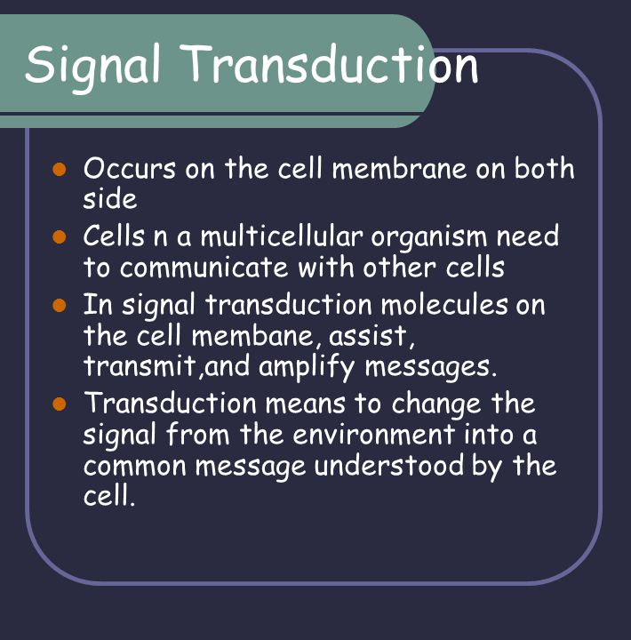 Signal transduction The transduction occurs between a receptor on the outside of the cell and a molecule in the cytoplasm which will amplify the signal so that it is received and acted on