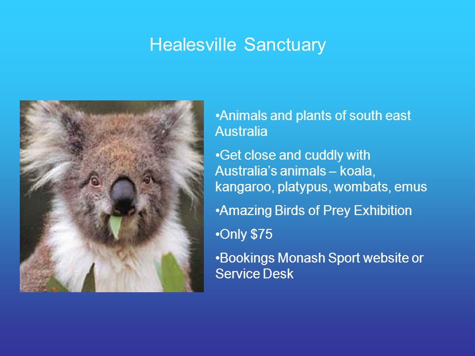Healesville Sanctuary Animals and plants of south east Australia Get close and cuddly with Australias animals – koala, kangaroo, platypus, wombats, em