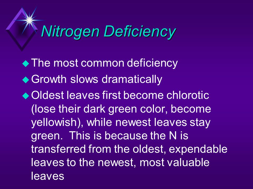 Nitrogen Deficiency u The most common deficiency u Growth slows dramatically u Oldest leaves first become chlorotic (lose their dark green color, beco