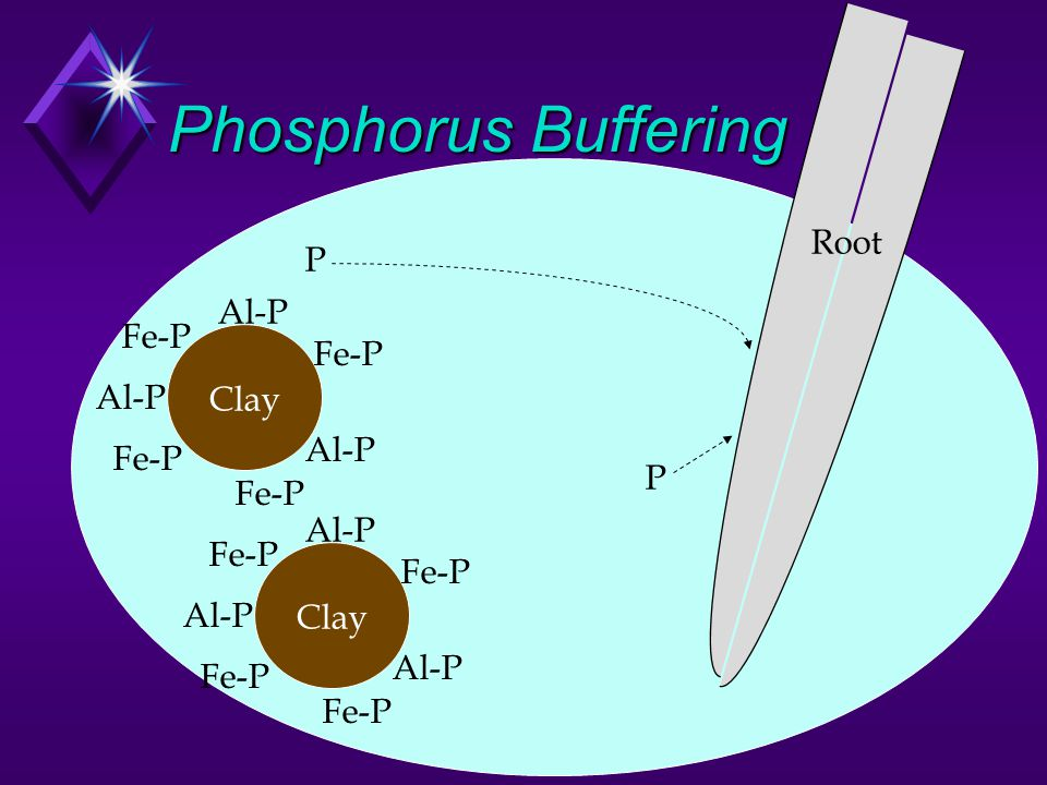 Phosphorus Buffering Soil Solution Clay Al-P Fe-P P P Root Clay Al-P Fe-P