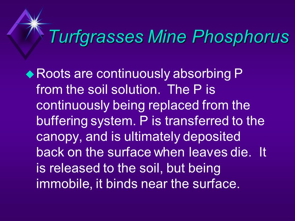 Turfgrasses Mine Phosphorus u Roots are continuously absorbing P from the soil solution. The P is continuously being replaced from the buffering syste